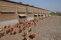 Free range poultry.