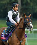 ARCADIA, CA - OCT 31: Lord Nelson, owned by Spendthrift Farm LLC and trained by Bob Baffert, exercises in preparation for the Breeders' Cup TwinSpires Sprint at Santa Anita Park on October 31, 2016 in Arcadia, California. (Photo by Casey Phillips/Eclipse Sportswire/Breeders Cup)
