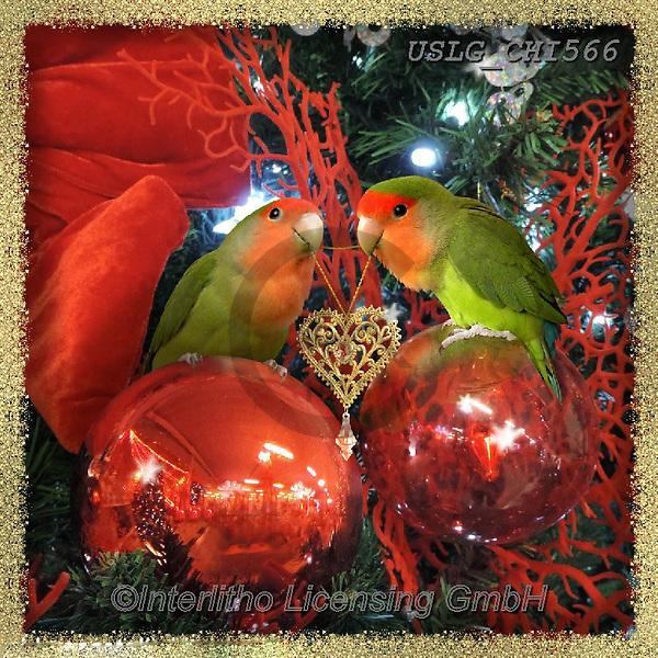CHIARA,CHRISTMAS ANIMALS, WEIHNACHTEN TIERE, NAVIDAD ANIMALES, paintings+++++,USLGCHI566,#XA# ,funny ,funny