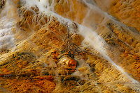 """""""DEATH BECOMES HER""""<br /> <br /> A lone, dead tree stands on the side of Mammouth Terraces at Yellowstone Park."""