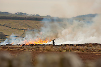 Burning heather on a grouse moor, Pateley Moor, Pateley Bridge, North Yorkshire.