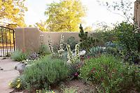 David Salman New Mexico xeric courtyard garden inside walls