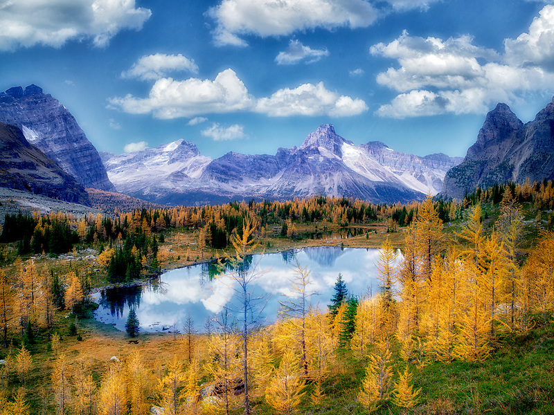 Hungabee Lake and fall colored Larch as seen from above .Yoho National Park, Opabin Plateau, British Columbia, Canada