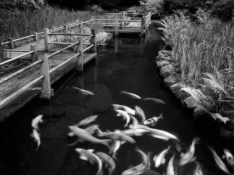 Koi and iris beds path. Japanese Gardens, Oregon
