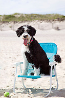 Dog in beach chair. Bulls Neck Bay, NY