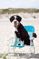 Dog in beach chair. Bulls Neck Bay, NY