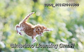 REALISTIC ANIMALS, REALISTISCHE TIERE, ANIMALES REALISTICOS, cats, paintings+++++,USLGSC162044500,#A#, EVERYDAY ,photos,fotos,pounce,cat,cats,kitten,kittens,Seth