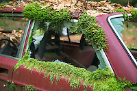 Old Volvo with moss in Siuslaw national Forest, Oregon