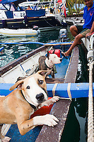 Tahitian man with his dogs at dock in Raiatea