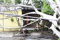 SAO PAULO)30 de dezembro 2012.(QUEDA DE ARVORES) Cinco arvores cairam na Rua Godoi Codaço e Rua Nicolau Barreto no Bairro do Itaim Bibi Proximo a Av Morumbi, As arvores acabou 3 casa.  . ADRIANO LIMA / BRAZIL PHOTO PRESS).