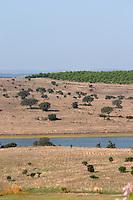 dry fields with oak trees herdade do esporao alentejo portugal