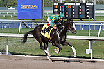 Scenes from Gulfstream Park. Odds on favorite Honor Code finishes 10 lengths behind Social Inclusion for second at Gulfstream Park.  Hallandale Beach, Florida 03-12-2014