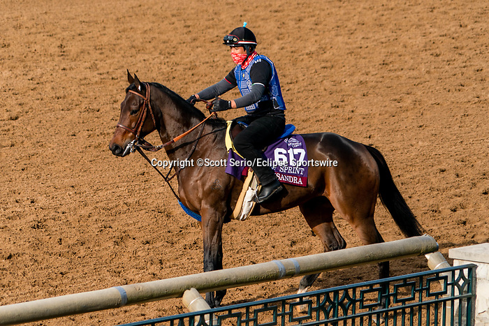 November 5, 2020: Oleksandra, trained by trainer Neil D. Drysdale, exercises in preparation for the Breeders' Cup Turf Sprint at Keeneland Racetrack in Lexington, Kentucky on November 5, 2020. Scott Serio/Eclipse Sportswire/Breeders Cup/CSM
