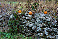 Rustic New England stone wall with pumpkins.
