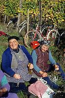 Europe/Hongrie/Tokay/Env Sarospatak/Pajzos: Le repas des vendangeurs dans les vignes