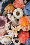 Colorful shells on the Glacier Bay shore.