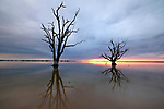 Sunset and silhouette of dead trees over Lake Bonney, Barmera, Riverland, SA