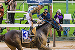 Elmont, NY - OCTOBER 01: Joking, #3  with Manuel Franco  aboard. wins the Vosburgh Stakes, at Belmont Park on October 1, 2016, in Elmont, NY. (Photo by Sue Kawczynski/Eclipse Sportswire/Getty Images)