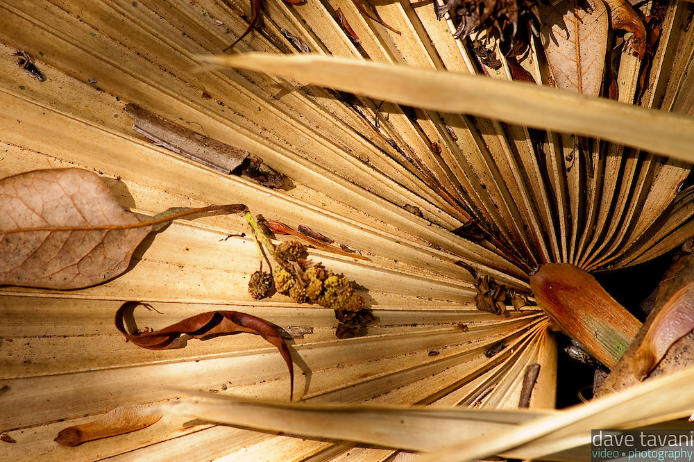A dried palmetto rests on the ground with other debris at Jean LaFitte National Park in Louisiana.