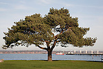 Tree and Hythe Pier in Southampton, England, UK
