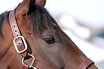 17 January 2010.   Kentucky Stallion Farms. Street Sense at Darley @ Jonabell Farm.  Kentucky Derby winner Street Sense first crop are yearlings of 2010.