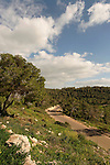 Ofer forest scenic road