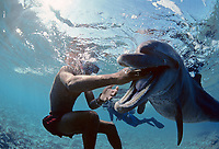 Snorkeler playing with wild Bottlenose Dolphin, Tursiops truncatus, Nuweiba, Egypt, Red Sea., Northern Africa