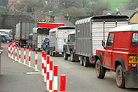 Cattle trailers at Beeston mart.