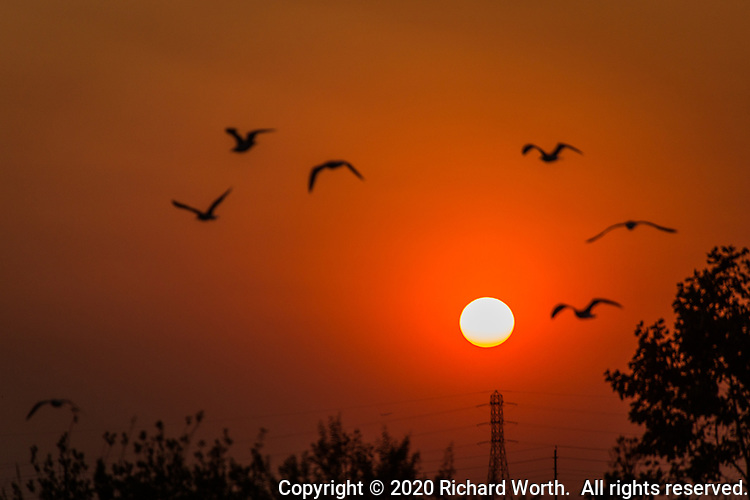 Gulls fly toward the setting sun colored red by smoke from wildfires blown into the San Francisco Bay area on September 28, 2020.