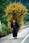 barefoot farmer carrying load from rapeseed harvest along road in rural China near the Three Gorges, Asia