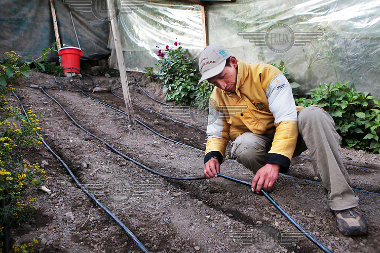 A man works on the cultivation of vegetables inside hot houses, where they use a simple water saving technology such as drip irrigation. This is part of a project by the Peruvian NGO ADRA which works with people affected by from poverty and malnutrition in the region of Oyon.