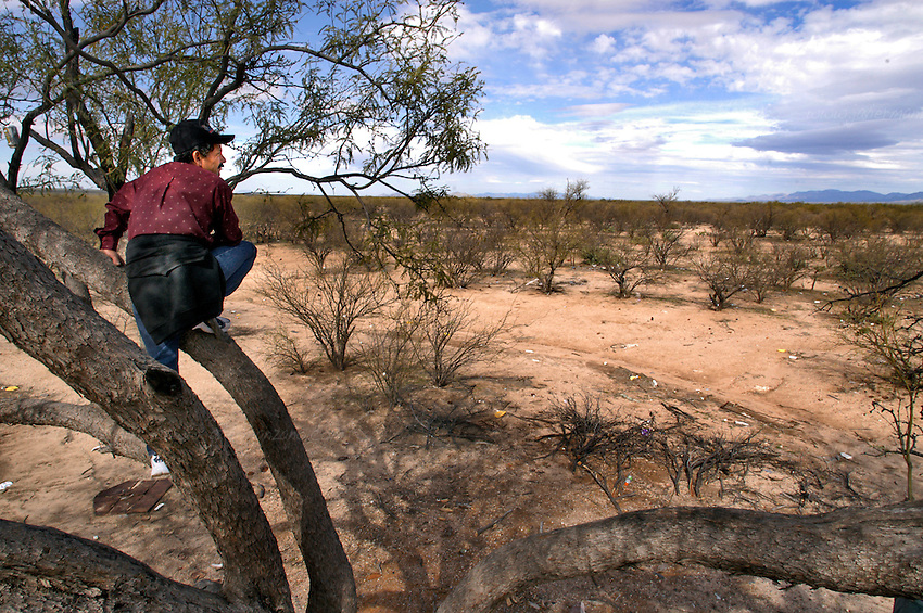 An experienced border-crosser climbs a tree to look for landmarks that will guide him to Tucson, Arizona, as he has traveled this underground railroad several times in the past. This endless cycle continues as both members of the political fence continue to talk about the most cost-effective manner, both politically and economically, to solve this human exodus which claims hundreds of lives each year.       .Sonora-Mexico. 01/23/05.