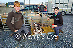 Admiring the puppies at the Castlemaine Fair in memory of the late John O'Donoghue and as a fundraiser for the Kerry Hospice on Sunday l to r: Adam Crean (Camp) and Jason Barrett (Camp).