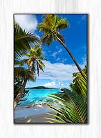 Gibney Beach Beauty