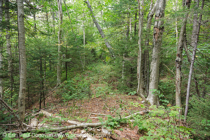 The Redrock Ravine spur line of the East Branch & Lincoln Railroad (1893-1948) in the Pemigewasset Wilderness of New Hampshire. This was a logging railroad operated by timber baron J.E. Henry.