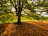 The Autumn Colours backlit and shadows on the fallen leaves.<br /> <br /> Stock Photo by Paddy Bergin