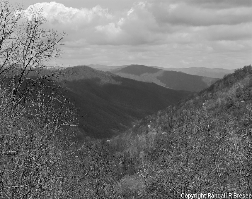 """""""Flowering Trees In Early Spring"""" <br /> Great Smoky Mountains National Park, North Carolina<br /> <br /> Spring in the Smokies finds some trees displaying their flowers before most leaves emerge. I set up my camera in mid-afternoon on one of the many pullouts on Highway 441 in the Great Smoky Mountains National Park. This image needs to be viewed as a fairly large, high resolution print to effectively present the flowering trees to the viewer."""