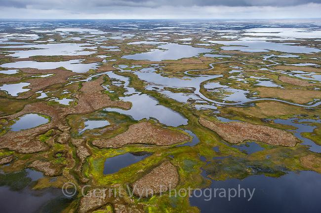 The Yukon and Kuskokwim rivers combine to form one of the largest delta systems in the world. Completely free flowing, only the Mississippi in North America is comparable. it contains 70-80% of all coastal wetland habitat in Alaska and is unequalled in its importance to migratory and nesting waterfowl and shorebirds. Yukon Delta National Wildlfie Refuge, Alaska. September.