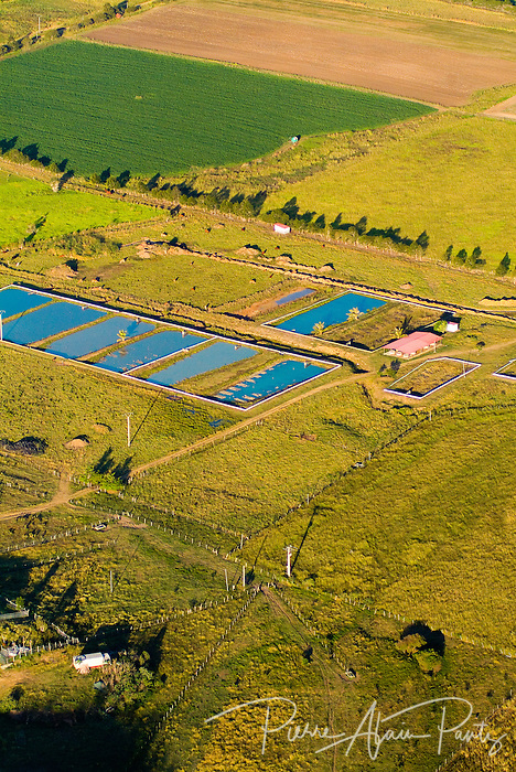 Aquaculture, côte Ouest