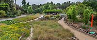 Path through meadows at Crescent Farm, sustainable demonstation garden; Los Angeles County Arboretum and Botanic Garden