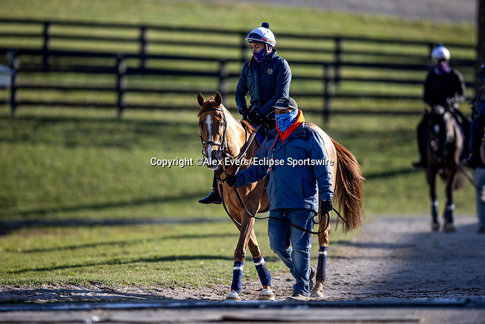 November 3, 2020: Uni, trained by trainer Chad C. Brown, exercises in preparation for the Breeders' Cup Mile at Keeneland Racetrack in Lexington, Kentucky on November 3, 2020. Alex Evers/Eclipse Sportswire/Breeders Cup