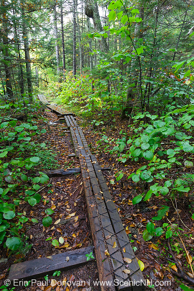 Puncheons along the Pemi Trail near Lafayette Place in Franconia Notch in the New Hampshire White Mountains on a cloudy and rainy autumn day. Puncheons are used in wet areas along trails. Trail puncheons are known to be slippery when wet, so some trail steward groups cut grooves into the walking surface to help with traction.