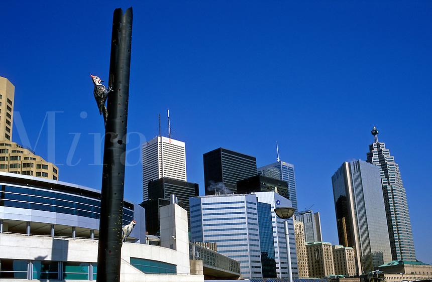 Canada, Ontario, Toronto, view of skyline