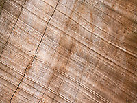 Wood texture of a fallen tree in the Jungle of Cambodia