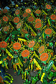 Rio de Janeiro, Brazil. Carnival: Imperatrice samba school with orange, cactus and banana fruit theme.