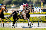 ARCADIA, CA - OCTOBER 01: Avenge with Flavien Prat wins the Rodeo Drive Stakes at Santa Anita Park on October 01, 2016 in Arcadia, California. (Photo by Alex Evers/Eclipse Sportswire/Getty Images)