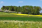 CHE, Schweiz, Kanton Thurgau, bei Steckborn im Kanton Thurgau, Blumenwiese und Apfelbluete, Bauer mit Traktor maeht die Wiese | CHE, Switzerland, Canton Thurgau, near Steckborn, flower meadow, apple blossom, farmer with tractor mowing gras