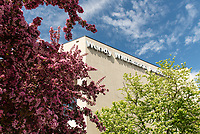 Red Splendor Crabapple Trees, planted in the 1970s,  blossom on the south side of UAA's Wendy Williamson Auditorium.
