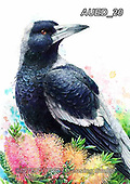 Carlie, REALISTIC ANIMALS, REALISTISCHE TIERE, ANIMALES REALISTICOS, paintings+++++,AUED20,#A#, EVERYDAY ,australian wildlife