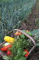 Europe/France/Aquitaine/33/Gironde/Saint-Estèphe: Le panier de légumes biologiques de Nicole dUfau jardinière qui produit les légumes qu'utilise Thierry Marx à Cordeillan Bages